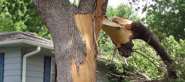 A lightning strike blasted the bark off this tree Monday morning in Basehor residents Katie and Keith Mather's front yard. Katie was sent to the hospital after receiving a shock from the strike.