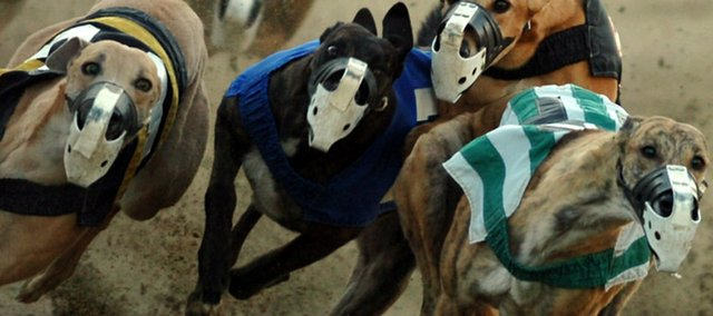 Greyhounds nudge each other for position as they tear around the track  during a late-afternoon race at The Woodlands in Kansas City, Kan. Owners of The Woodlands say they will close the track for good on Aug. 24.