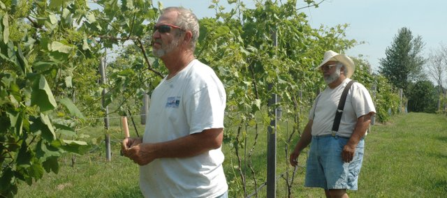 Scott Hiatt, left, and Sal Coco work in their joint vineyard. The two neighbors decided to open the Wine Barn in May after making wine as a hobby for several years.