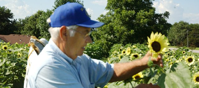 Darrel Zimmerman cuts one the sunflowers the De Soto Rotary Club planted behind the barn at Zimmermans Kill Creek Farm as a fundraiser for the Rotary Club International&#39;s project to eradicate polio in the three remaining countries where it still exist. The sunflowers bouquets were sold during the first two farmers markets Zimmerman annually has at the farm during the produce season and Saturday and Sunday.