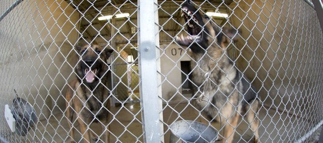 Military working dogs bark as handlers walk by the kennels at the Department of Defense Military Working Dog Center at Lackland Air Force Base.