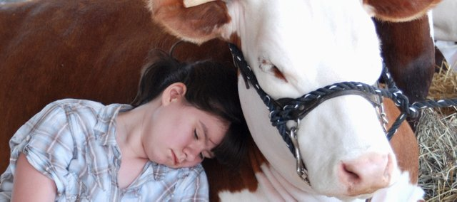 Morgan Akey, Kansas City, Mo., takes a nap with her heifer Jeaniey during the 2007 Leavenworth County Fair.