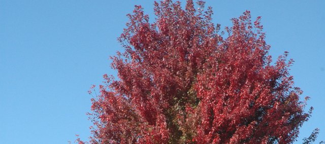 Trees leaves are beginning to turn colors as autumn sets in. A Baker University biologist says the area is on target for spectacular fall colors.