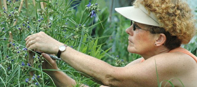 Diana Hockman, Shawnee, tends to a coneflower plant in the Country Garden at Shawnee Town. As the spring planting season nears, Leavenworth County master gardener Joy Kromer and her husband, Bill, provide tips below on spring and summer gardening.