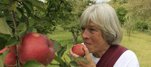 Andrea Norris tastes an apple from Beisecker Farms orchard. Her husband, Tom Beisecker, said the orchard's Gala apple crop from August came through fine, but his Jonathan apple crop was small due to the stress of the summer heat and humidity. He anticipates a large part of his harvest from his 300 trees will be at the end of the month with Romes and heirloom.