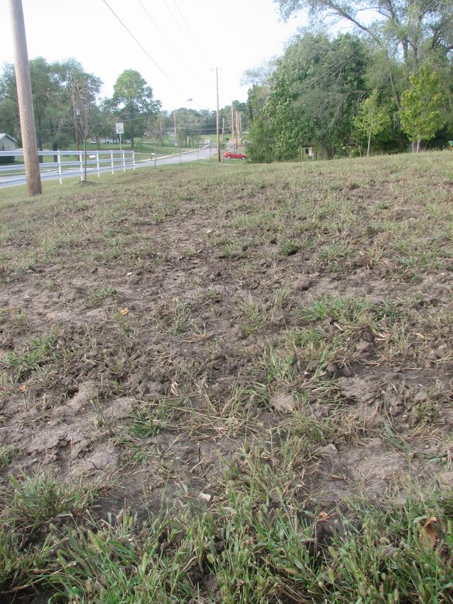 Clumps of crabgrass sprout up from the landscape of Susan Guy's yard along 150th Street where construction crews lowered the ground last fall as part of repairs to the street. At Monday's city council meeting, Guy said she worried that grass seed planted last week by a city contractor would not grow properly.