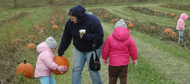 Visitors last year to Kerby Farm Pumpkin Patch pick out their pumpkins. This year's pumpkin crop is going to be less than ideal according to area pumpkin farmers.