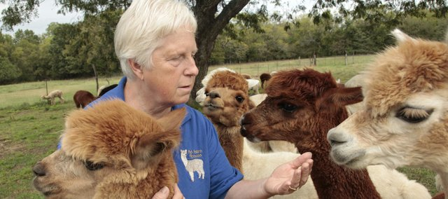 Petting some of her 57 alpacas, Claudia Hey enjoys her herd Saturday as part of National Alpaca Day. Hey's farm, which is outside of Baldwin City, offers socks and sweaters woven from the fiber of the animals.