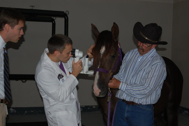 Jonathan Pucket, a resident with the K-State Vet Medical Teaching Hospital, examines the eyes of 6-year-old Levi before determining surgery to remove cataracts could successfully restore the horse's vision. Jay Miller, right, of Tonganoxie discovered the problem soon after he picked up the wild mustang to trian for an exhibition showcasing the horses.