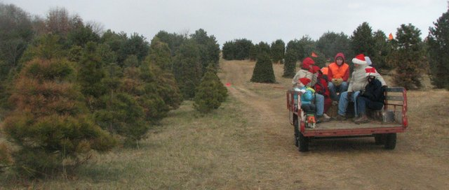 The Webb family of Gladstone, Mo., rides a wagon out into Wilderson Tree Farm.