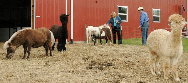 CLO&#39;s Midnight Farm is hosting a Spring Family Fun Day on April 30. The farm is located northeast of Baldwin City, between Baldwin City and Eudora.