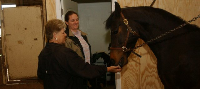 Valerie Francis gives a snack to Ignite, one of 23 Morgan horses she has at her Moriah Training Center west of Tonganoxie, as the centers trainer, Laureli Orona, looks on. Having experienced success in the show arena and as a breeder, Francis is looking to add childrens programing at the farm with Oronas help.