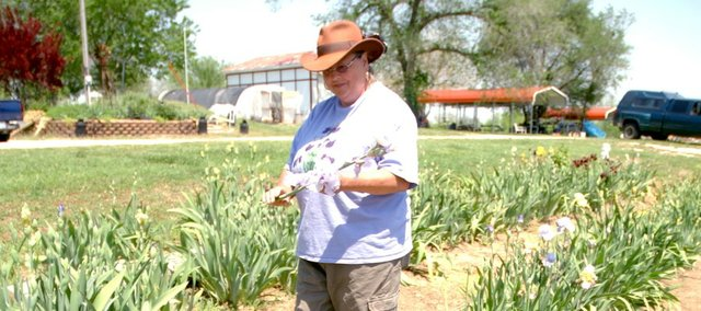 Meri O'Hare enjoys one of the blooming iris plants Monday on the farmstead she and her husband, David, own northwest of Tonganoxie. They are having their first Iris Festival each Thursday through Sunday in May to sell iris tubers.