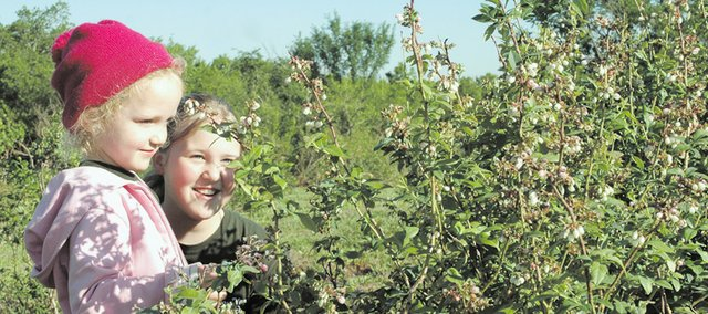 Lydia and Anna Wiley check out the blossoms on the Elliott blueberry plants in the True Vine Ranch blueberry field.