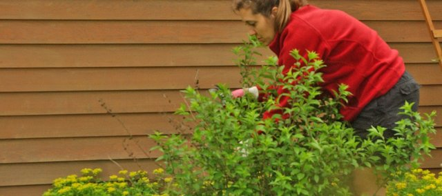 Angie Andrews helps tends a plant during a recent Tuesday morning near the potting shed at Magnatech Park. She is one of several Tonganoxie master gardeners who have volunteered time to plant and maintain the flowerbeds at the park since 2001.
