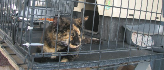 A stray cat, picked up this past weekend near Basehor-Linwood High School, rests at the city of Basehors temporary animal holding facility at the citys water treatment plant. Finding new homes for stray animals has become costly for the city since it adopted a no-kill policy.