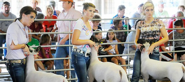 Three Baldwin City area 4-H'ers compete in the sheep show last Thursday night at the Douglas County Fairgrounds in Lawrence. They are, from left, MacKenzie Flory, Paris Nottingham and Taylor Stanley. They were presenting level four showmanship. Stanley won grand champion and Flory was the reserve grand champion.