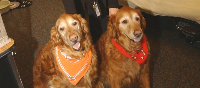 Tonganoxie Elementary School counselor Connie Weltha and her golden retrievers Bo (left) and Chip have teamed up to make the school a more friendly place for four years. Among other things, the dogs, registered as therapy dogs with the American Kennel Club, provide positive rewards for students and classrooms and help calm children with emotional problems.