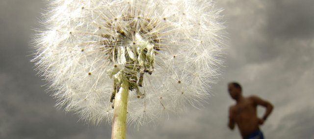 High pollen levels can make life miserable for allergy sufferers. Plants such as this dandelion along the Kansas River can be many people&#39;s worst enemy.