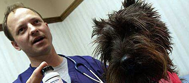 Eudora Animal Hospital veterinarian George Schreiner was called to treat a horse several years ago that ended up dying from rabies. Schreiner uses rabies vaccinations on companion animals like this Scottish terrier named Captain Bridger, as well as large animals like horses and cattle.