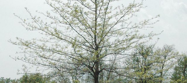 Trees dot VFW Park in Tonganoxie. Arbor Day, which originated in Nebraska, will be celebrated Friday, April 27.