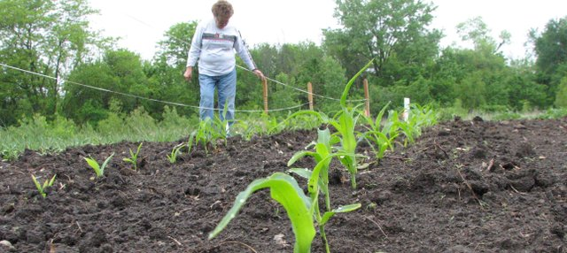 Basehor resident Pat Rogers examines her plot at the Basehor Community Garden on Monday morning. In the foreground are sweet corn stalks that have sprouted since Rogers planted an array of vegetables about a month ago. The garden, located on the north end of Basehor City Park, is open for its first growing season.