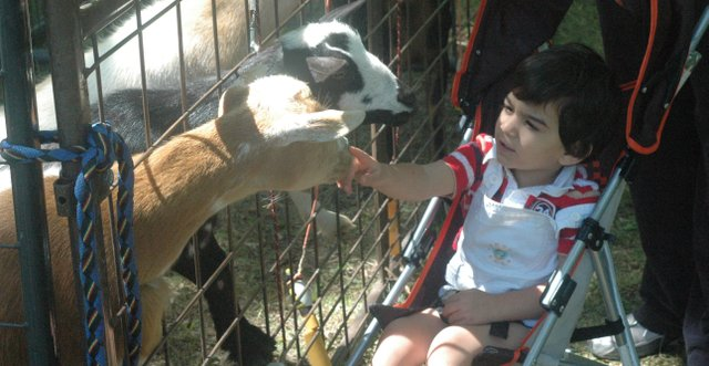 Neville Machado, 2, reaches out to touch a goat in the petting zoo at the 2012 Basehor Dairy Days festival in Basehor City Park on June 2.