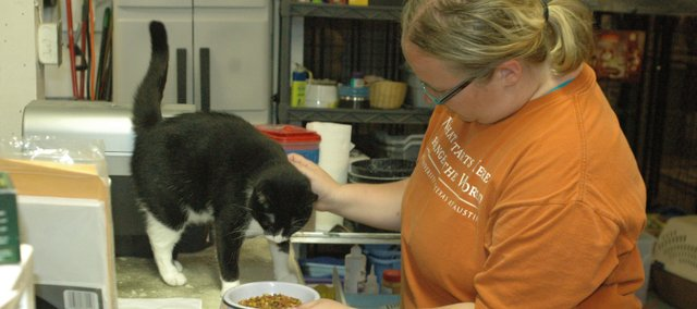 Volunteer Makenzie Breidenthal pets Tia, a cat awaiting adoption, after filling a food bowl for the cats at Bonner Animal Rescue&#39;s shelter, 104 Forest St. Tia and several other cats are let out to play while their cages are cleaned.