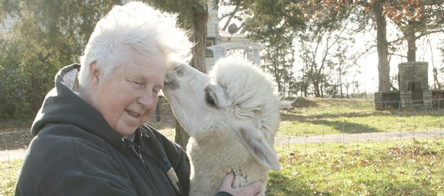A young male alpaca nuzzles Claudia Hey on Monday during her short visit to the male pasture of the Ad Astra Alpacas farm she owns with her husband, Bob, south of Baldwin City. The couple's herd of the South American animal has grown from three to 59.