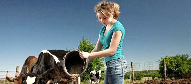 Taylor Leach feeds cattle on her family's dairy farm in Linwood.