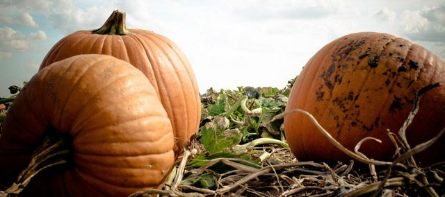 Douglas County commissioners delayed for two weeks a decision on allowing a pumpkin patch business east of Baldwin City because of neighbor's concerns.