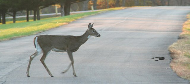 "Deer killed on Douglas County roads can mean meat on the table for those on ""deer list."""