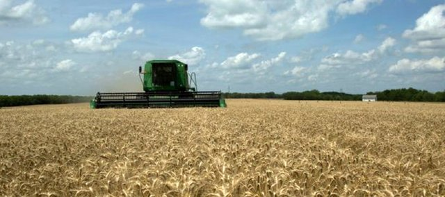 The wheat harvest is underway in Douglas County, as David Metsker cuts wheat west of Baldwin City on Thursday
