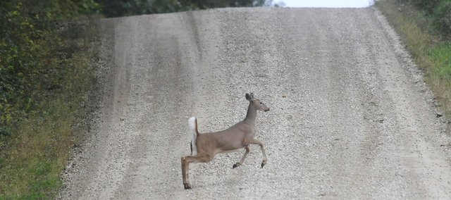 A deer crosses a road north of Lawrence during the morning of Sunday, Oct. 12, 2014.
