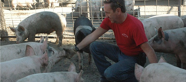 Gaylen Knapp kneels among some of the older pigs at Knapp Family Farms, which has been raising pigs for pork since 1954 just outside of Basehor.