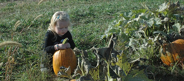 Jenna Mason, 2, of Platte City, Mo., checks out a pumpkin Saturday at the Kerby Farm Pumpkin Patch just outside of Bonner Springs, which she and her family were visiting with relatives who live in Basehor.
