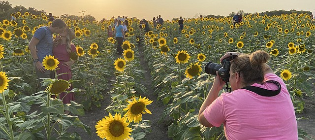 TJ Nichols and Lauren Nichols, Overland Park, share a kiss during a photo shoot with photographer Kristen Cline, Weston, Mo., on Monday a the sunflower Fields at Grinter Farms.