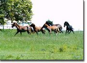 These were among horses that were rounded up last week from property about two miles east of Tonganoxie.