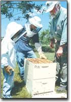 "Orley ""Chip"" Taylor, right, helps youth understand the intricacies of beekeeping on Saturday at Leavenworth County Fairgrounds in Tonganoxie. For more about Taylor's work, see page 5B."