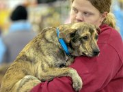 Taz, a one-year old terrier mix, got special attention from volunteer Corey Hutten.