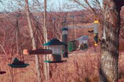 Birds flitter to various feeders that hang on a wire in front of Dorothy Tolman's home in rural Tonganoxie. This is the first year Tolman has hung her feeders together. She said the numerous  feeders seemed to be popular with the birds in her neighborhood.