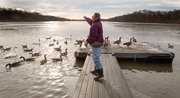 Dave Isabell tosses feed to the swans and geese that gather near his dock on Bear Lake in southern Leavenworth County. Isabell feeds the birds twice a day, spending about $100 a month on bird feed. The swans have returned to the lake for the past four winters.