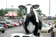 A giant cow owned by Roberts Dairy made Basehor-Linwood High School the unmistakable site of the 2008 Basehor Dairy Days festival Saturday. Hundreds of guests flocked to the third annual event, which celebrated Basehor's century-old dairy heritage.