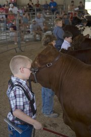 Seth Beying, 9, Leavenworth, and a line of competitors show their cattle at the Leavenworth County Fair on Thursday afternoon.