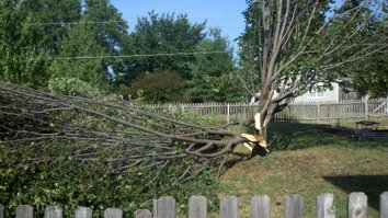 Strong storms overnight split this tree in the DeMeadows subdivision in De Soto on Aug. 18. Photo submitted by Kim Frieling.