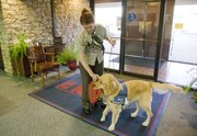 McLaren, a 2-year-old golden retriever in training to be an assistance dog, shows off some of his talents recently with his temporary owner, Lawrence woman Nancy Giossi, at the Kansas University Department of Continuing Education. McLaren has learned to carry Giossi's purse to and from her desk, as well as bring the office watering can to the various plants in the building.
