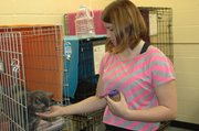Jenna Hammond shares some treats with a cat awaiting adoption while volunteering for Bonner Animal Rescue. She is using pet population control as a focus for her Gold Award projects. In the Kansas City metro area, an average of less than two Girl Scouts per county earn Gold Awards annually, compared to an average of 36 Boy Scouts per county who earn the Boy Scout equivalent, the Eagle.