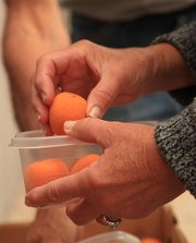 Stony Ridge Farms, located in McClouth, produced its first crop of apricots in several years, thanks to the mild winter. The farm sells its apricots at the Cottin's Hardware Farmers' Market in Lawrence.