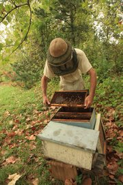 Richard Bean inspects trays of honeycomb in one of the hives he keeps at his Blossom Trail Bee Ranch near Baldwin City.