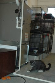Lucky, a cat who lives at Bonner Animal Rescue due to his FIV, plays near the new heating and cooling unit that was installed in the building Monday after the animal shelter had gone months without a heater.